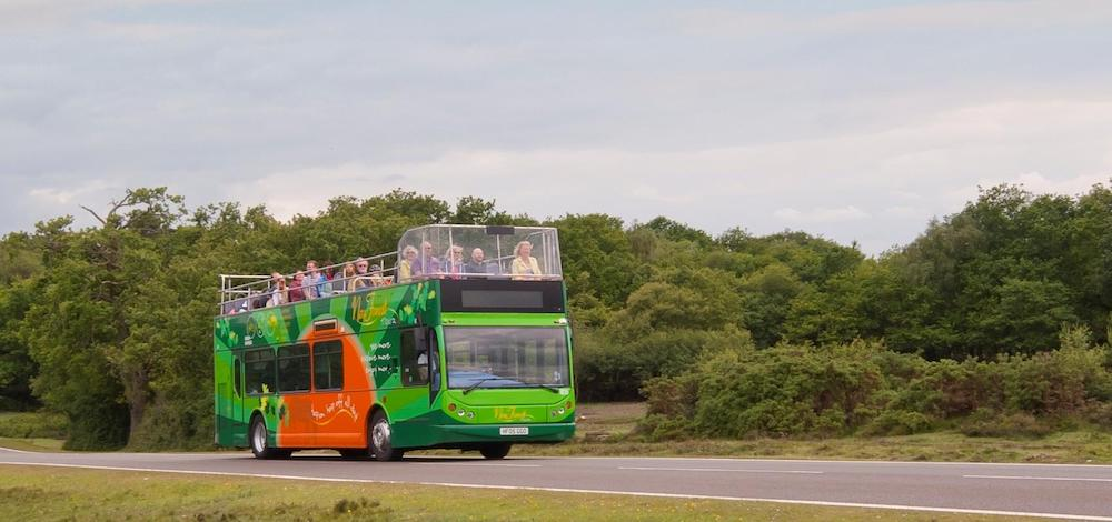 The New Forest Tour